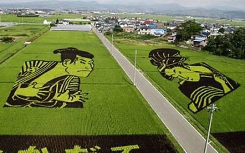 campos-arroz-dibujos-arte-inakadate