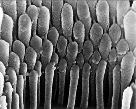 cuerpo-humano-microscopio-cabello-oido