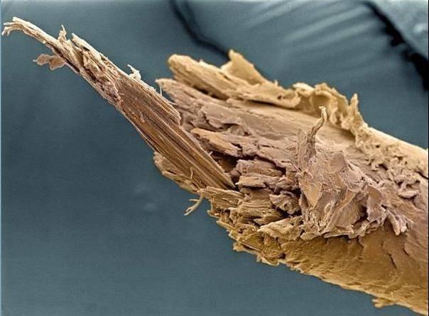 cuerpo-humano-microscopio-cabello-pelo