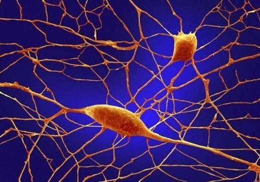 cuerpo-humano-microscopio-neuronas-Purkinje