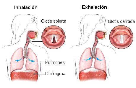 hipo-respiracion