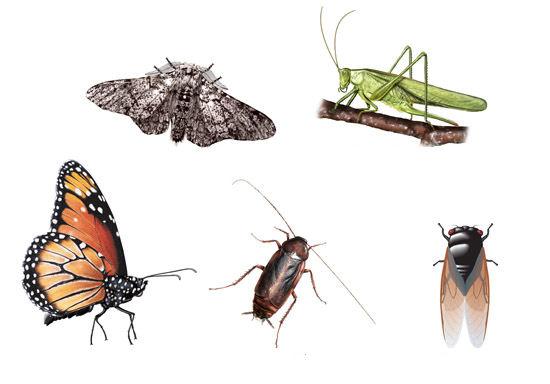 insectos tipos