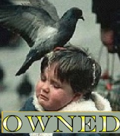 owned palomas