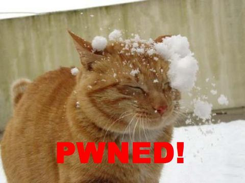 owned pwned gato
