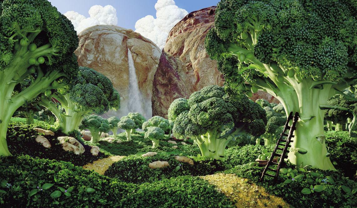 paisajes verduras bosque