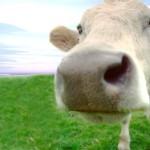 ¿Tienen los animales sentimientos?