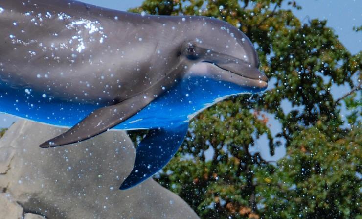 animales-bonitos-delfines