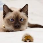 animales-graciosos-gato-bizco