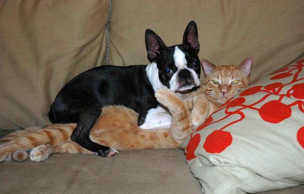 animales-graciosos-gato-perro