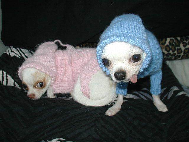animales-graciosos-perritos-vestidos