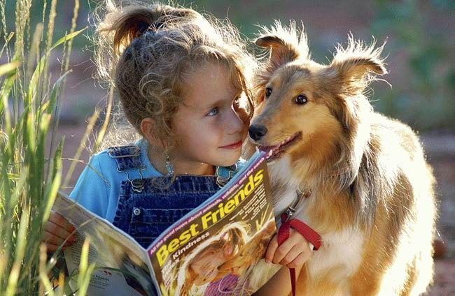 animales-graciosos-perro