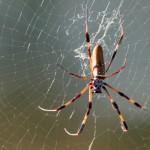 Puntos de mira elaborados con hilo de araña