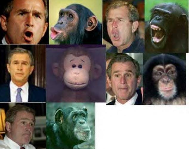 bush_mono_caras_monkey