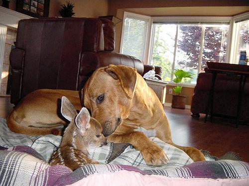 dog-deer-perro-ciervo