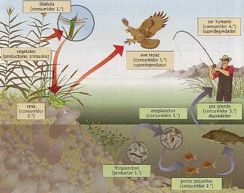 ecosistema-abierto-cerrado-ciclos-renovacion
