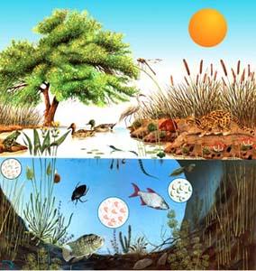 ecosistema-energia-cadena-carbono