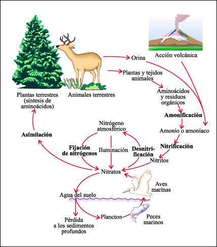 ecosistema-nitrogeno-ciclos-atomos