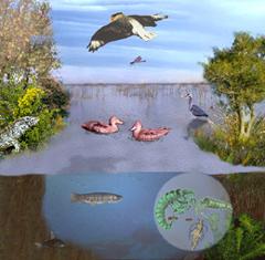ecosistema_lacustre_ecologia_biologia