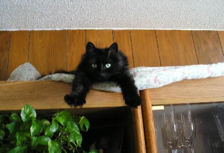 gato-cat-ninja