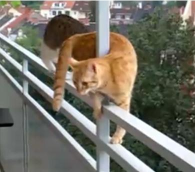 gatos equilibrio equilibristas