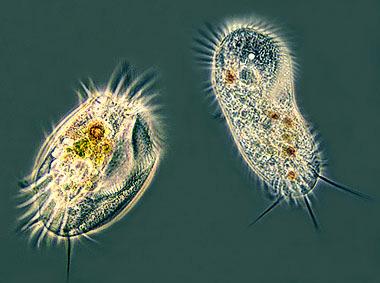 moneras-celulas-protozoo