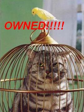 owned-gato-canario