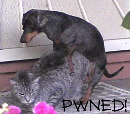 owned gato perro