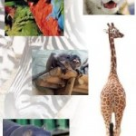 ¿De dónde proceden los vertebrados?