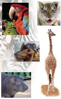 vertebrados-animales