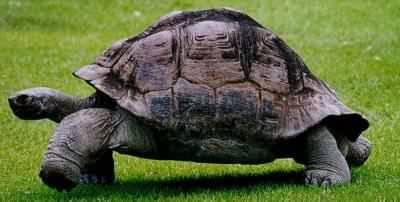 vertebrados-esqueleto-caparazon-tortuga