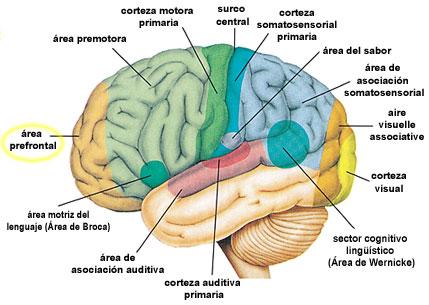 Shereshevsky cerebro mente