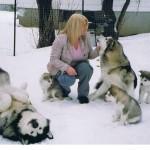 Fotografías de perros Alaskan Malamute