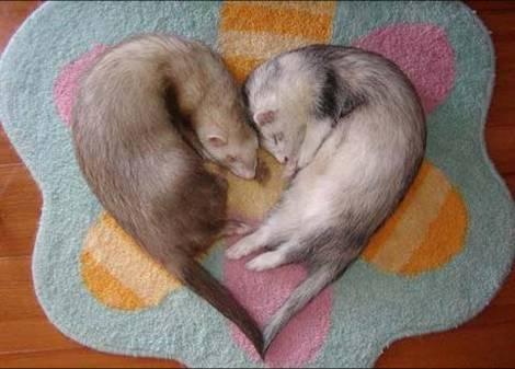 animales-graciosos-amor