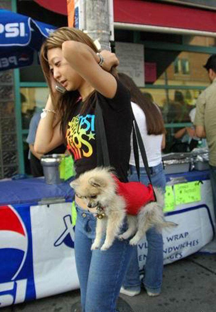 animales-graciosos-perrito-bolso
