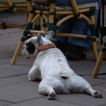 animales-graciosos-perro-espatarrado