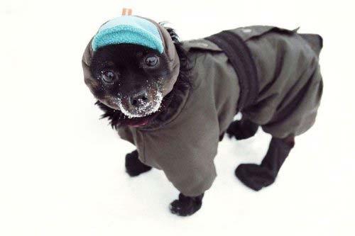 animales-graciosos-perro-nieve