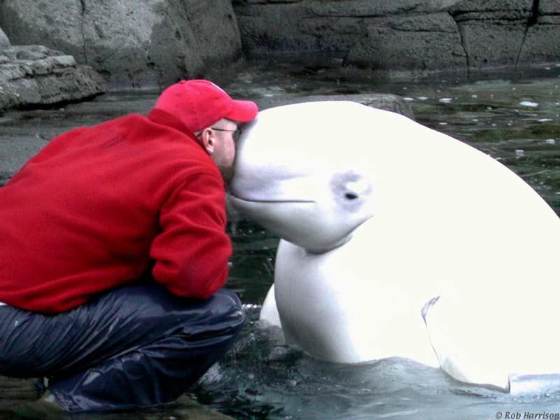beluga blanca beso hombre