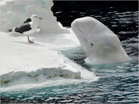 beluga-pajaro-imagen