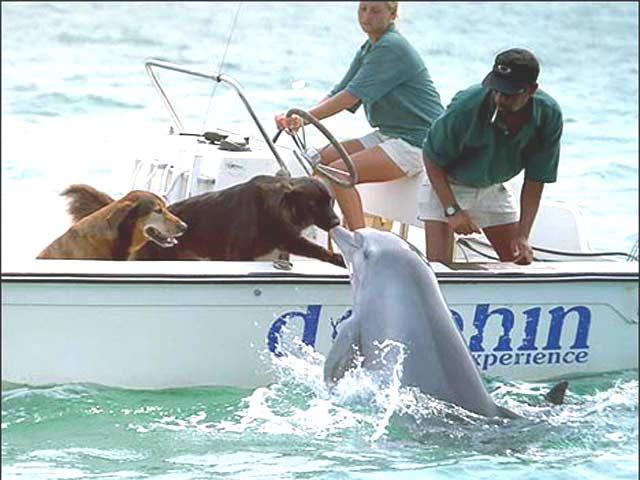 belugas-barco-perro