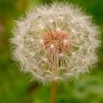 La reproducción de las plantas por semillas