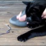 Una lombriz de tierra en la nariz de una gata