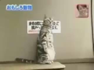 gato de pie video