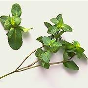 hierbamentha-sativa-hierbabuena