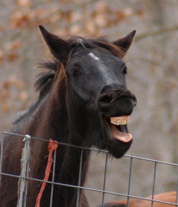 imagenes-humor-animales-caballo