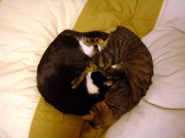 imagenes-humor-animales-gatos-dormidos