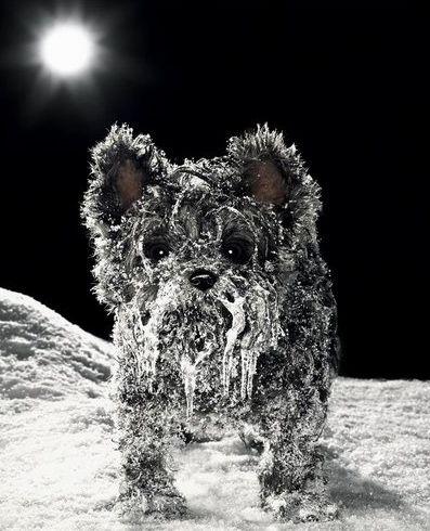imagenes-humor-animales-perrito-congelado