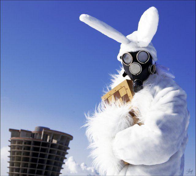 imagenes internet ajedrecista conejo