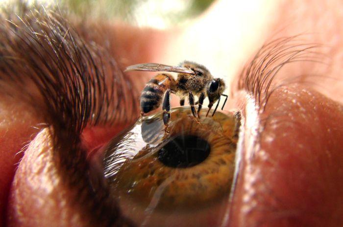 internet-pics-imagenes-ojo-abeja
