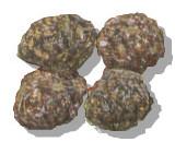 liebre-caquitas-cacas-mierda-excrementos