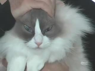 noticiero gatuno gatos humor 3